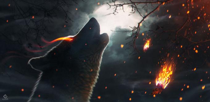 Фото Волк с огненным глазом, by Костя Басорин