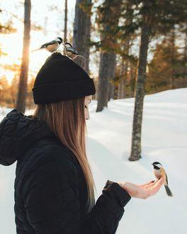 Фото Синица на руке и на голове девушки, фотограф Valеrie Derome-Massе