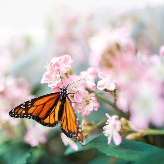 Фото Бабочка на цветущей весенней веточке, by valerie_deromemasse