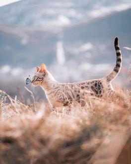 Фото Кошка с бабочкой на носу, by we. are. chilipepper