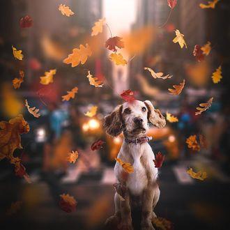 Фото Пес под осенней листвой, by stwesley