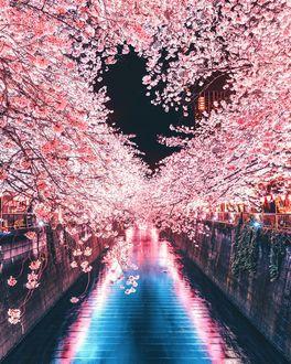 Фото Городской канал под цветущей сакурой, by Naohiro Yako