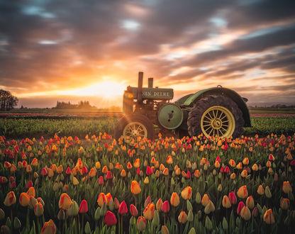 Фото Трактор на тюльпановом поле, be Jake Egbert Photography