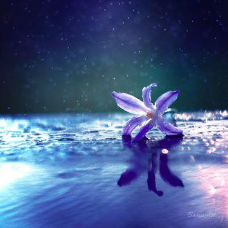 Фото Цветок на мокрой поверхности, by BaxiaArt