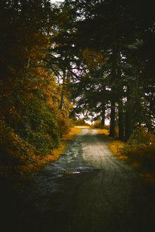 Фото Дорога, ведущая через осенний лес, фотограф Amine MSiouri