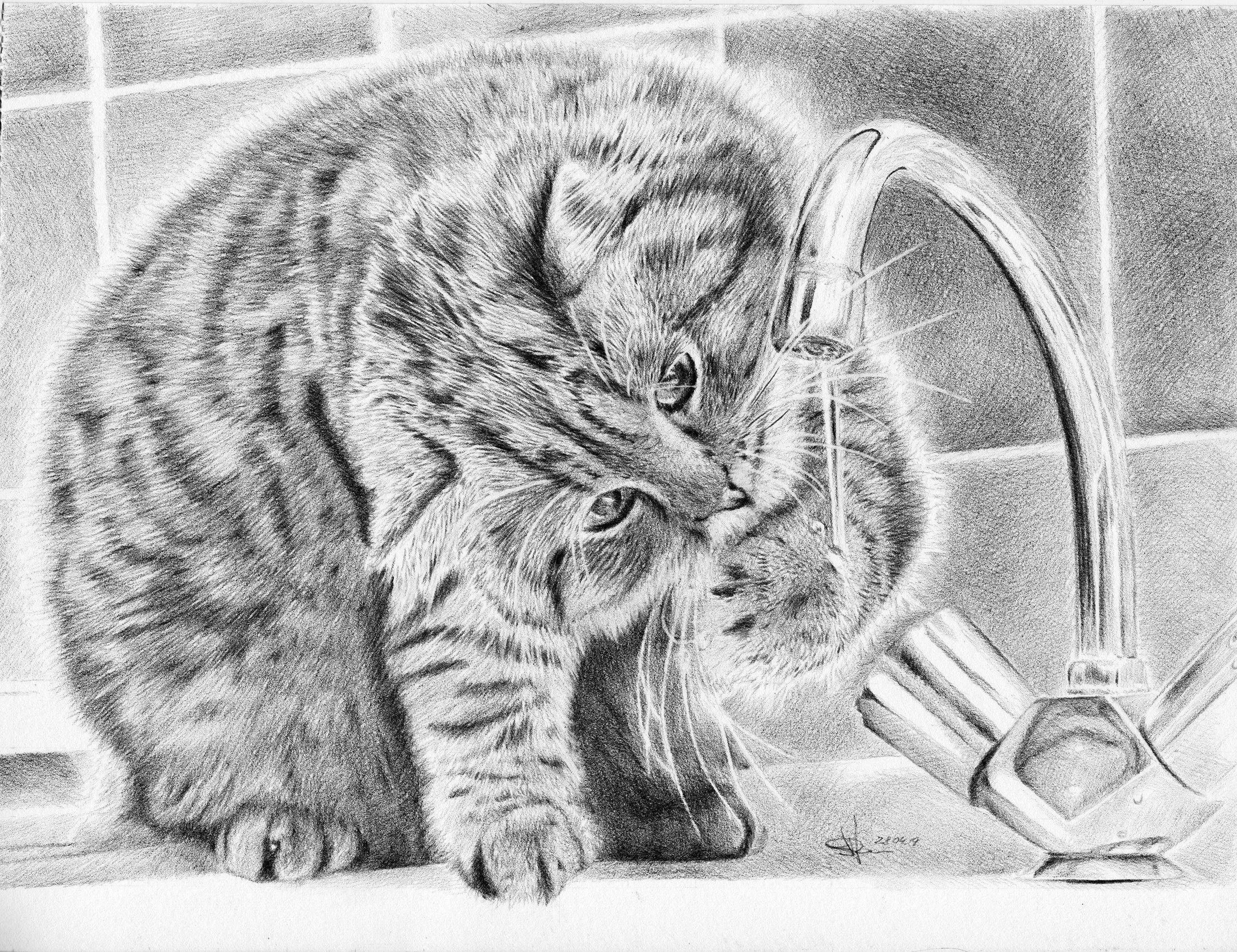 Фото Котик пьет воду из крана