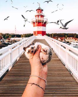 Фото В руке девушки ежик на фоне дорожки к маяку, by mr. pokee