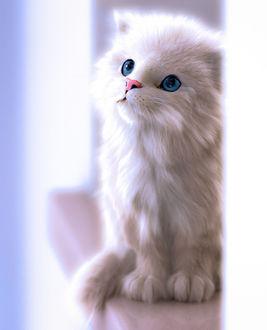 Фото Белый голубоглазый котенок, by Massimo Righi