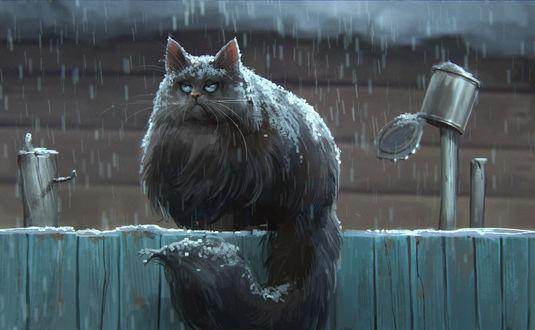 Фото Недовольный кот сидит на заборе под снегом, by Daria Rashev