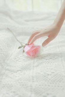 Фото Рука девушки прикасается к розе