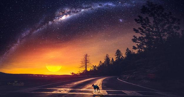 Фото Кошка на дороге под небом с ярким уходящим солнцем, by Ellysiumn