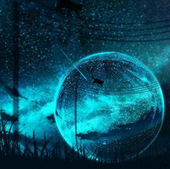 Фото Сквозь стеклянный шар виден черный кот, гуляющий по линиям электропередач ночью, by JW