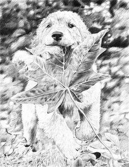 Фото Рисунок карандашом собаки, которая несет в зубах листик