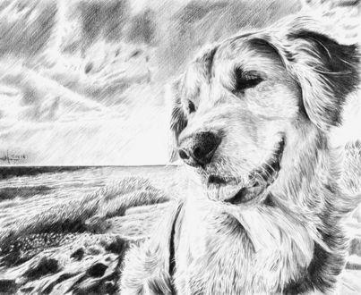 Фото Рисунок собаки, которая гуляет на берегу моря. Автор Алексей Паршуков, alex_darkart