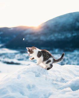 Фото Котенок играет в снегу, by Oscar Nilsson