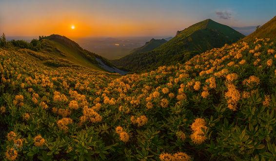 Фото Цветущие желтые рододендроны в горах. Фотограф Лашков Федор