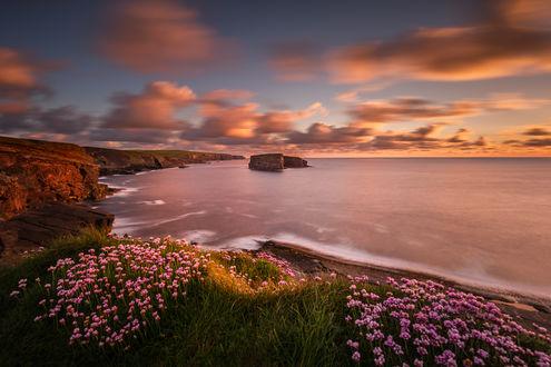Фото Живописное место Kilkee Cliffs с розовыми цветами на берегу, Ирландия. Фотограф Ryszard Lomnicki