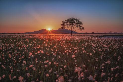 Фото Закат солнца над полем. Фотограф c1113