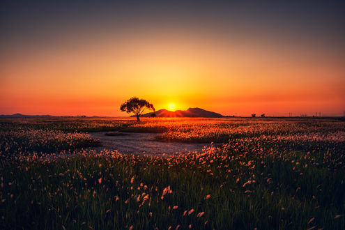 Фото Закат солнца над полем, by Tiger Seo