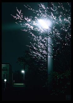Фото Весеннее цветущее дерево у городского фонаря