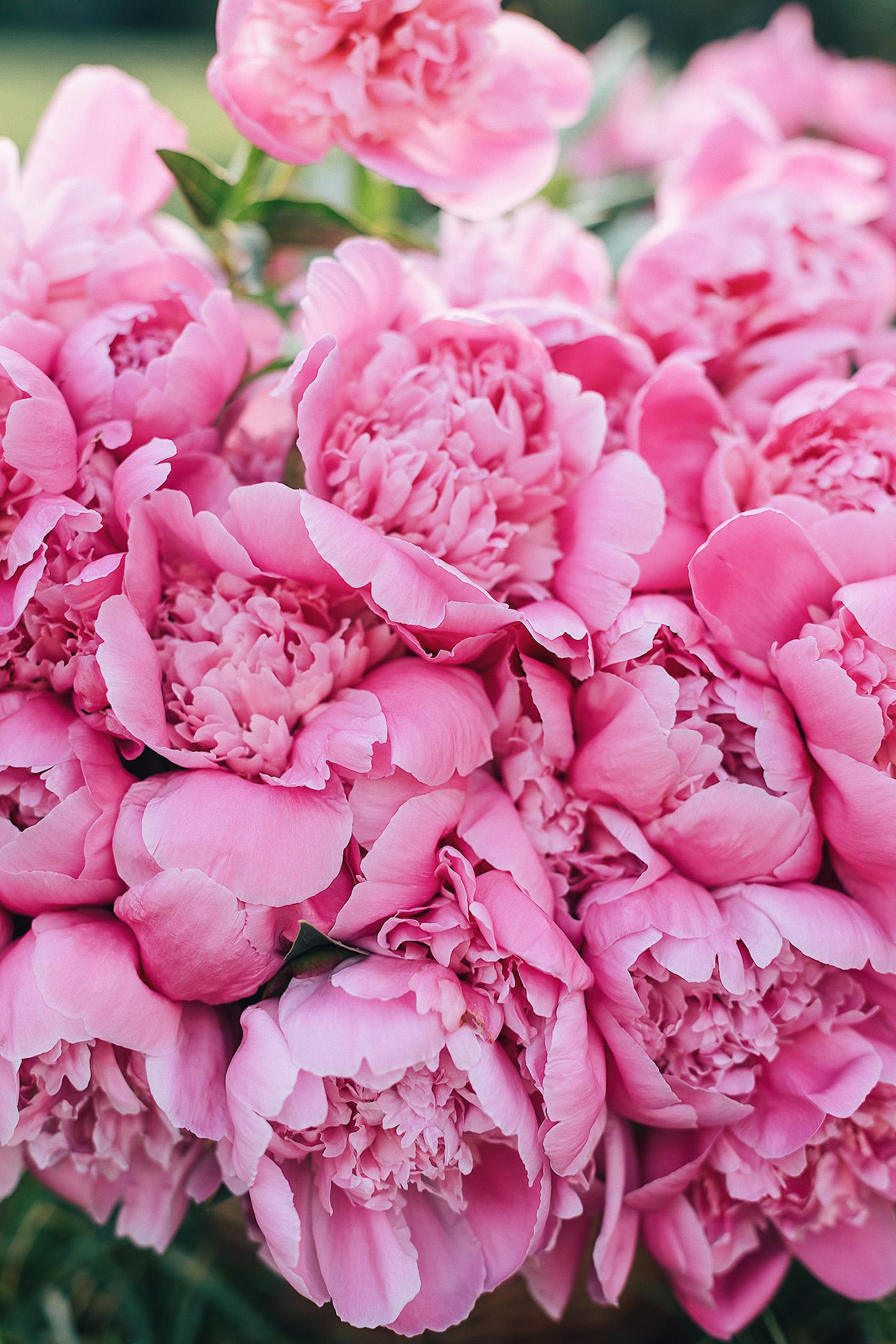 Розовые пионы, by Andreea Balaban