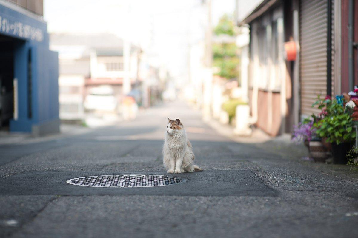 Фото Кошка сидит посреди дороги