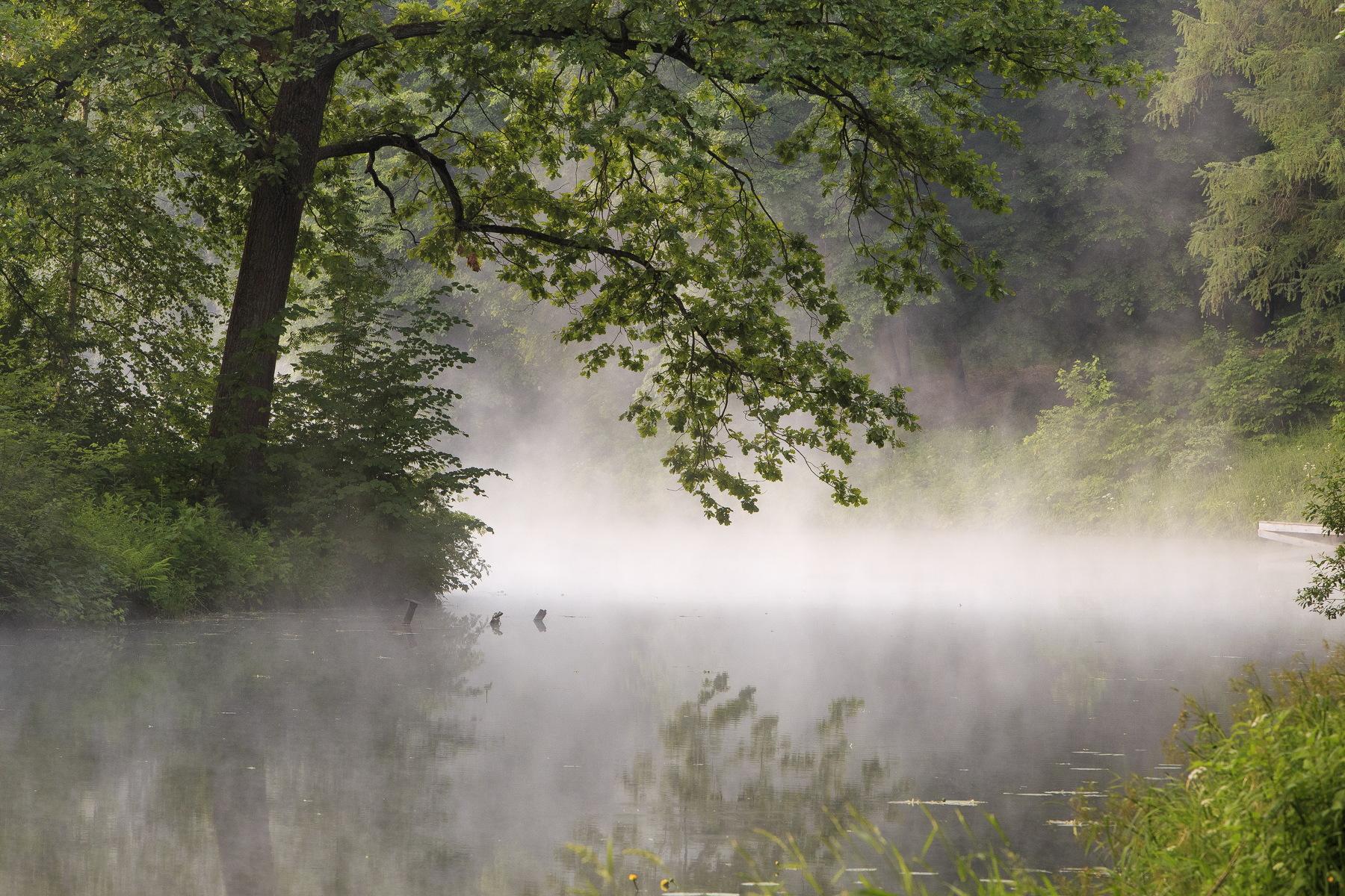 пробах участников туман над рекой фото новых
