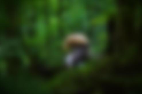 Фото Полуобнаженная девушка сидит на стуле в зеленом лесу. Фотограф Костянтин Баран