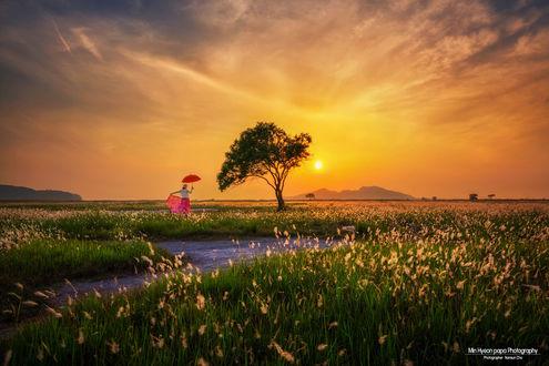 Фото Девушк с зонтиком стоит у дерева на фоне заката, by Namsun Cho