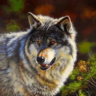 Фото Серый волк на природе, by EsthervanHulsen