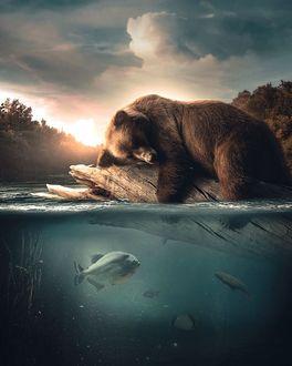 Фото Медведь спит на бревне, плавающем в воде, by zenzdesign