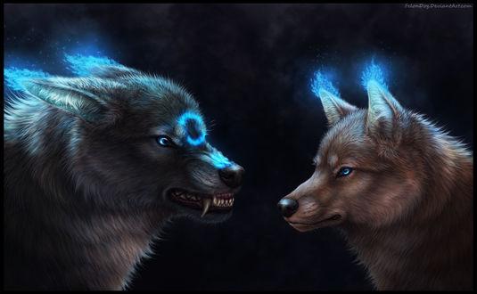 Фото Два волка стоят друг напротив друга, by FelonDog