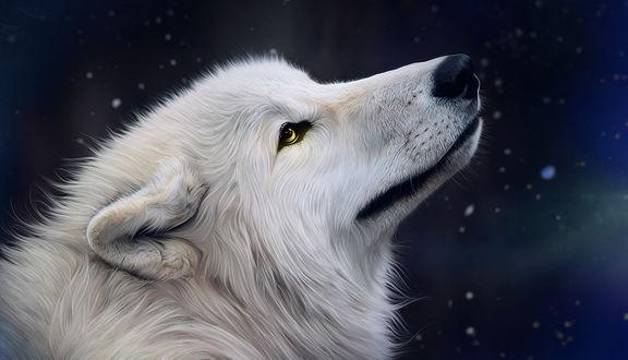 Фото Белый волк на фоне неба, by Nesla