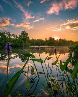 Фото Водные растения на фоне озерной глади на закате