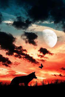 Фото Силуэт волка на фоне закатного облачного неба