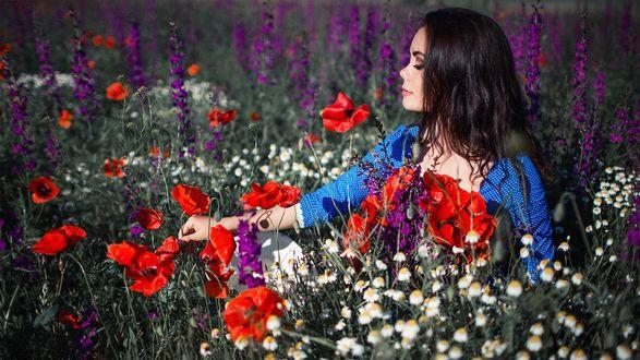 Фото Девушка Ксения Каленич на цветочном поле, фотограф Сергей Шацков
