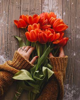 Фото У рук девушки красные тюльпаны, by anamarkovych