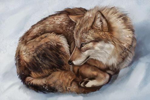 Фото Волк лежит на снегу, by Noctualis
