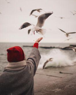 Фото Девушка протянула руку к чайке, by anamarkovych