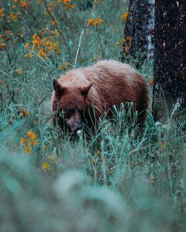 Фото Медведь на природе, by guth. co