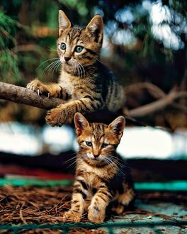 Фото Два котенка на природе, by abdllhaydmr