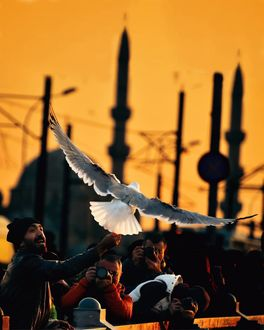 Фото Люди фотографируют голубя, by abdllhaydmr