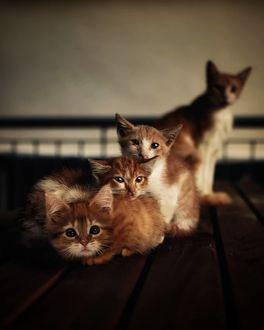 Фото Четверо маленьких котят, by abdllhaydmr