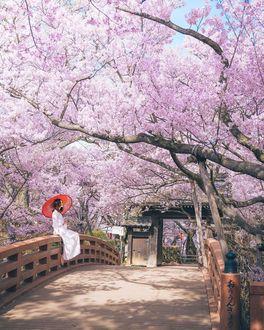 Фото Девушка в белой одежде с красным зонтом сидит на перилах моста под цветущей сакурой, by Hiroki