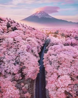 Фото Весенний пейзаж в Японии, by Kristina Makeeva