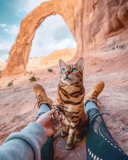Фото Хозяйка держит кошку за лапку, by sukiicat
