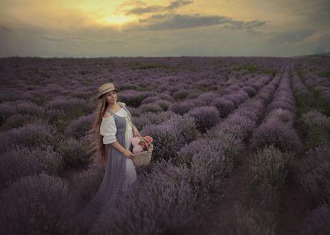 Фото Девушка в шляпе с корзиной в руках стоит на лавандовом поле. Фотограф Шевцова Наталия