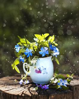 Фото Голубые цветы в кувшине на пне. Фотограф Анастасия Колесникова