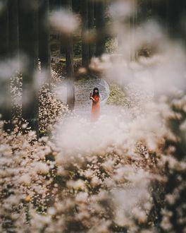 Фото Темноволосая девушка в красном платье с зонтом стоит в лесу, by tetsu