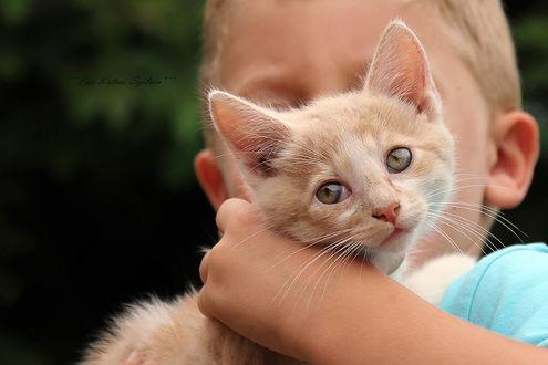 Фото Мальчик держит котенка на руках, фотограф Szilvia Pap-Kutasi